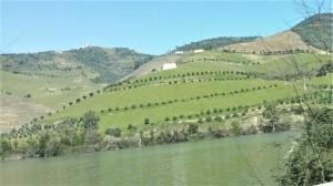 Pe Valea Raului Douro. Foto: Doina Rad