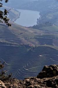 Valea Raului Douro.  Foto: Iris van Dortmond